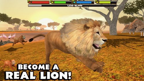 Скриншот для Lion Simulator - 2